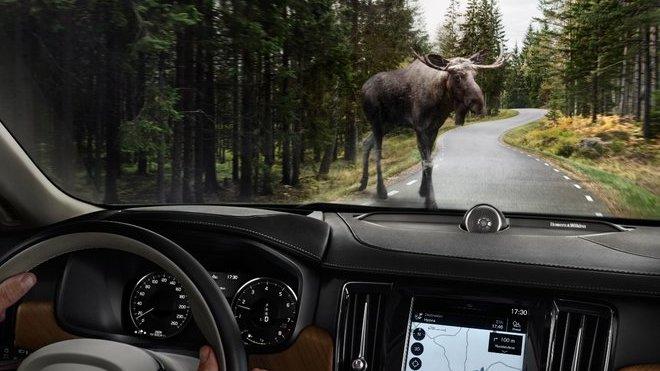 Nehod aut se zvířaty přibývá, jak se jim vyhnout?
