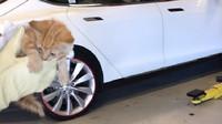 Kotě uvízlo v zadním nárazníku Tesly Model X