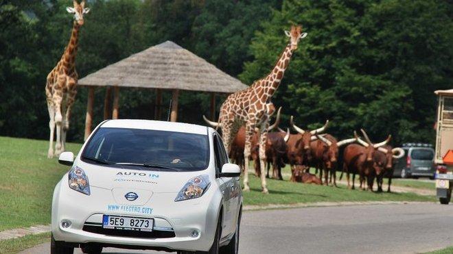 Nissan Leaf bude k dispozici návštěvníkům v ZOO Dvůr Králové