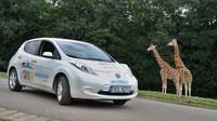 Nissan Leaf z projektu e-Safari