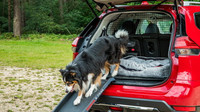 "Nissan X-Trail ""Paw Pack"""