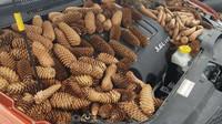 Veverky mohou napáchat pod kapotou automobilu pořádnou paseku