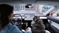 Tesla do svých modelů přidala tzv. Dog Mode