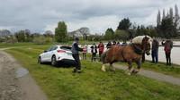 Tažný kůň vysvobodil zapadlý Ford Focus (Facebook/Jerome Mouret)