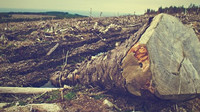 Kůrovec je až druhotná příčina,jeho rozšíření zapříčinilo nadměrné sucho,způsobené změnou přirozeného klimatu.
