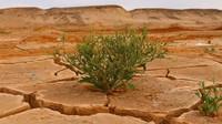 Nadměrné sucho je to co vnímáme jako současnou realitu, důsledky ukazuje ilustrativní foto.