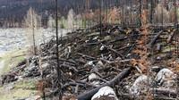 Zeleň a lesy jsou plíce země, dopustíme-li jejich zničení .......